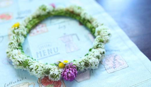シロツメクサの花冠の作り方 どうやって作るの?実物をみて実際に作ってみた!