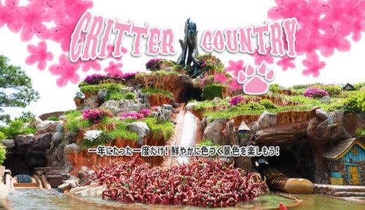 【東京ディズニーランド】おすすめフォトスポット!色鮮やかに映えるスプラッシュマウンテンを見に行こう!