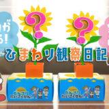 【チャレンジ1ねんせい】ミニひまわりかんさつセットで少しづつ成長する植物の観察を楽しもう!私のひまわり観察日記大公開!